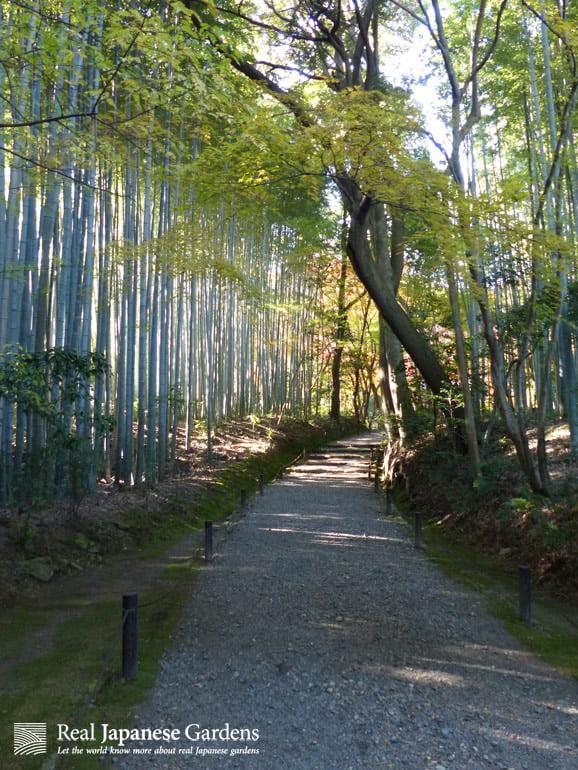 bamboo_path_logo