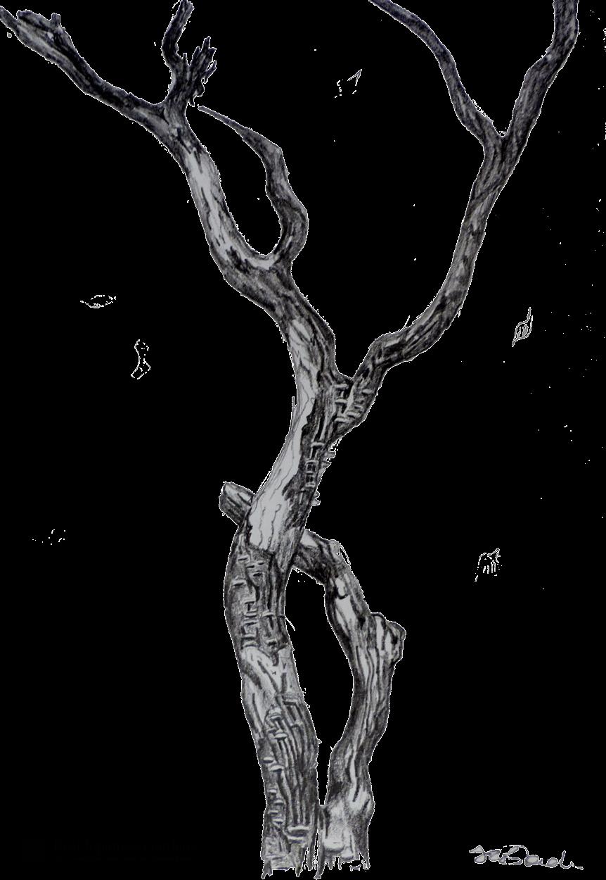 tree-sketch_logo