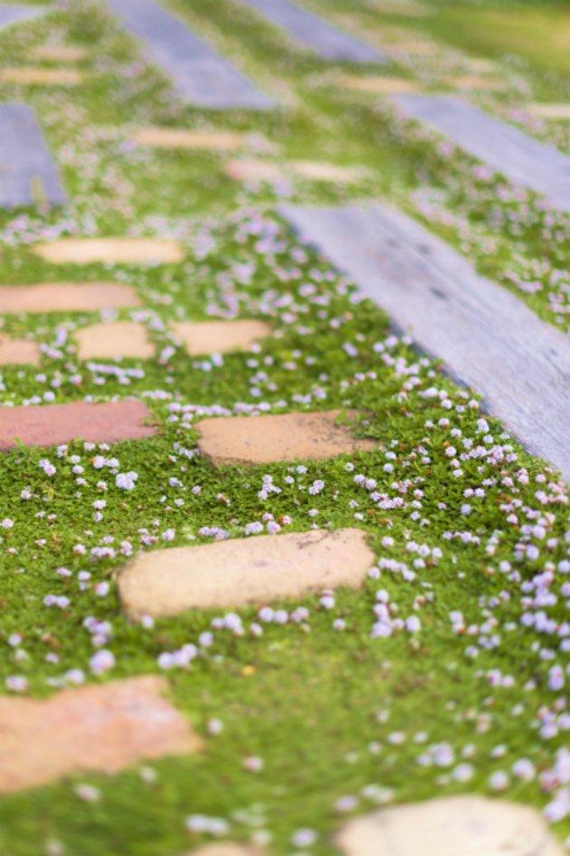 A modern garden path with bricks and Phyla. By Slow Garden in Hamamatsu.