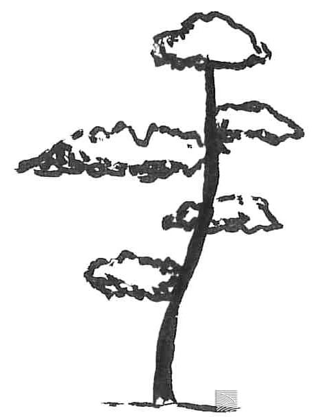 nageshi 流枝 tree shape