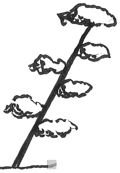 shakan 斜幹 tree shape
