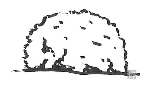 tamamono 玉物 shape