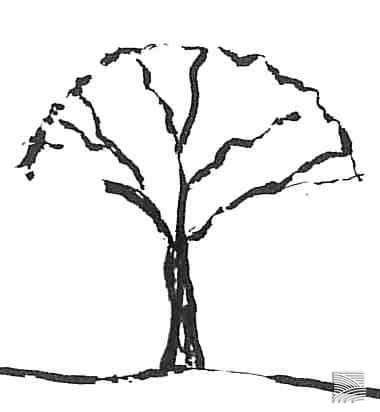 umbrella tree shape