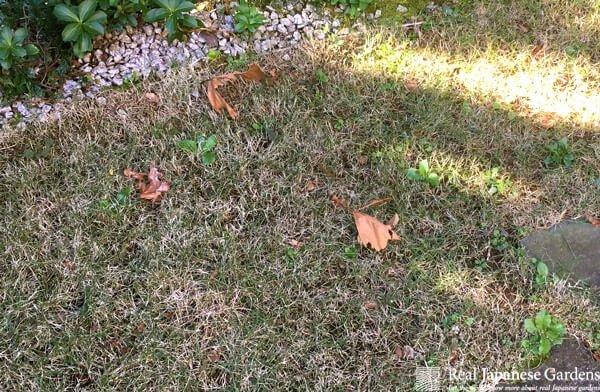 Lawn Maintenance November
