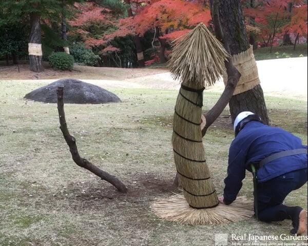 Winter protection Yukizuri
