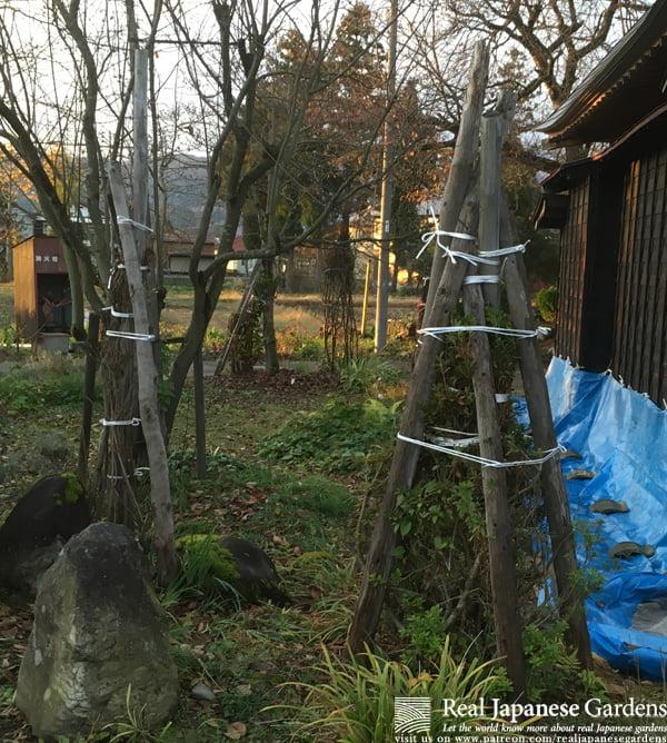 Protecting shrubs against snow with gomata-shibori.